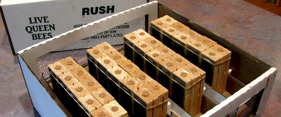 Shipping Bees from Tuckamore Bee Company